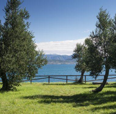 Oli da olive italiane: Evo Garda DOP